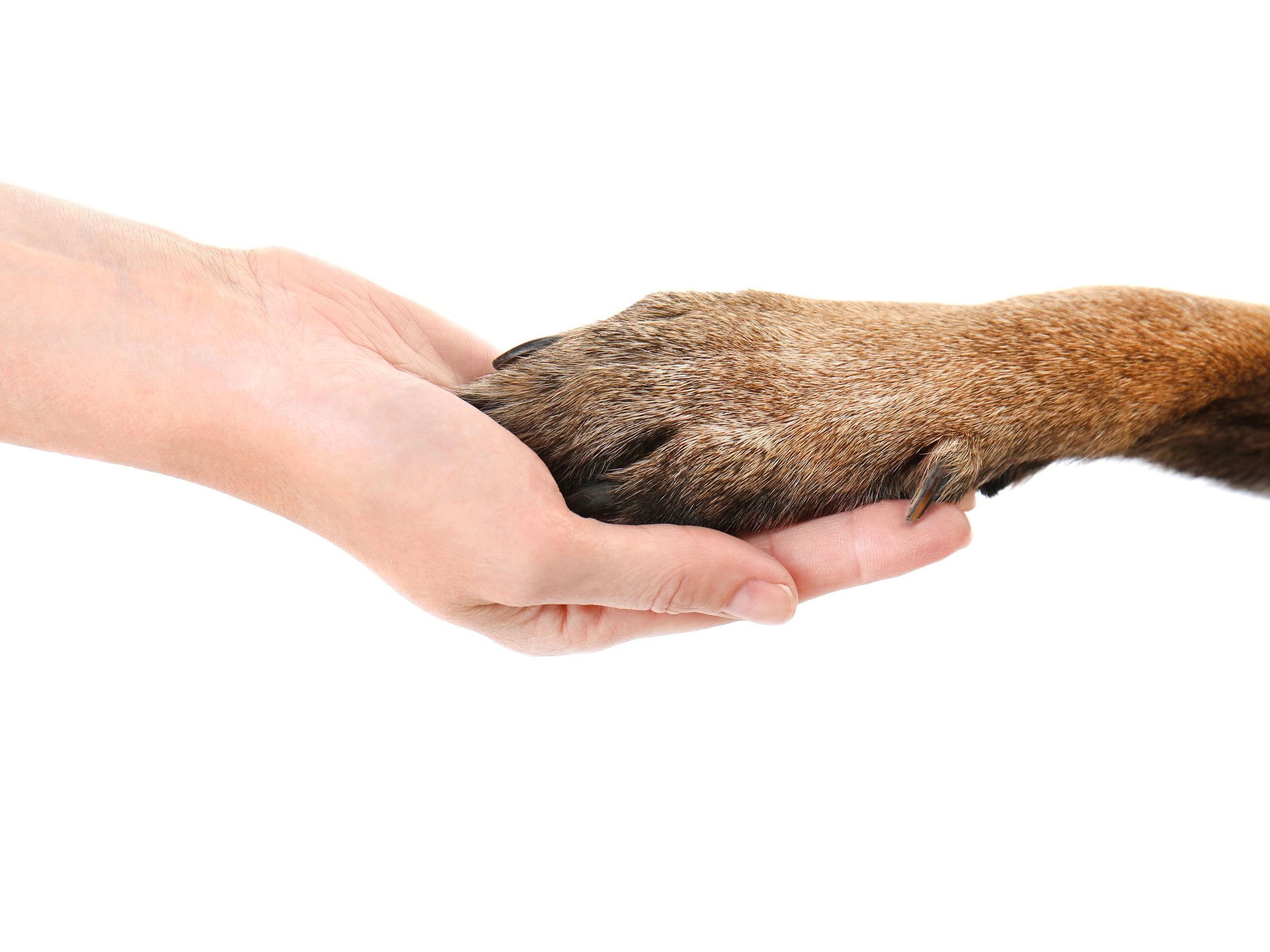 bigstock-Dog-paw-and-human-hand-isolat-206146810